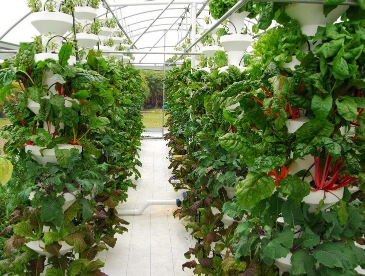 Life In Balance Vertical Farms