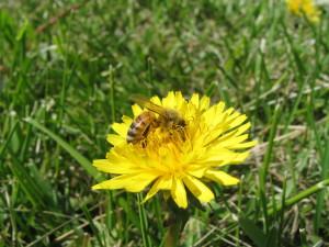 pollination-1399359-1920x1440