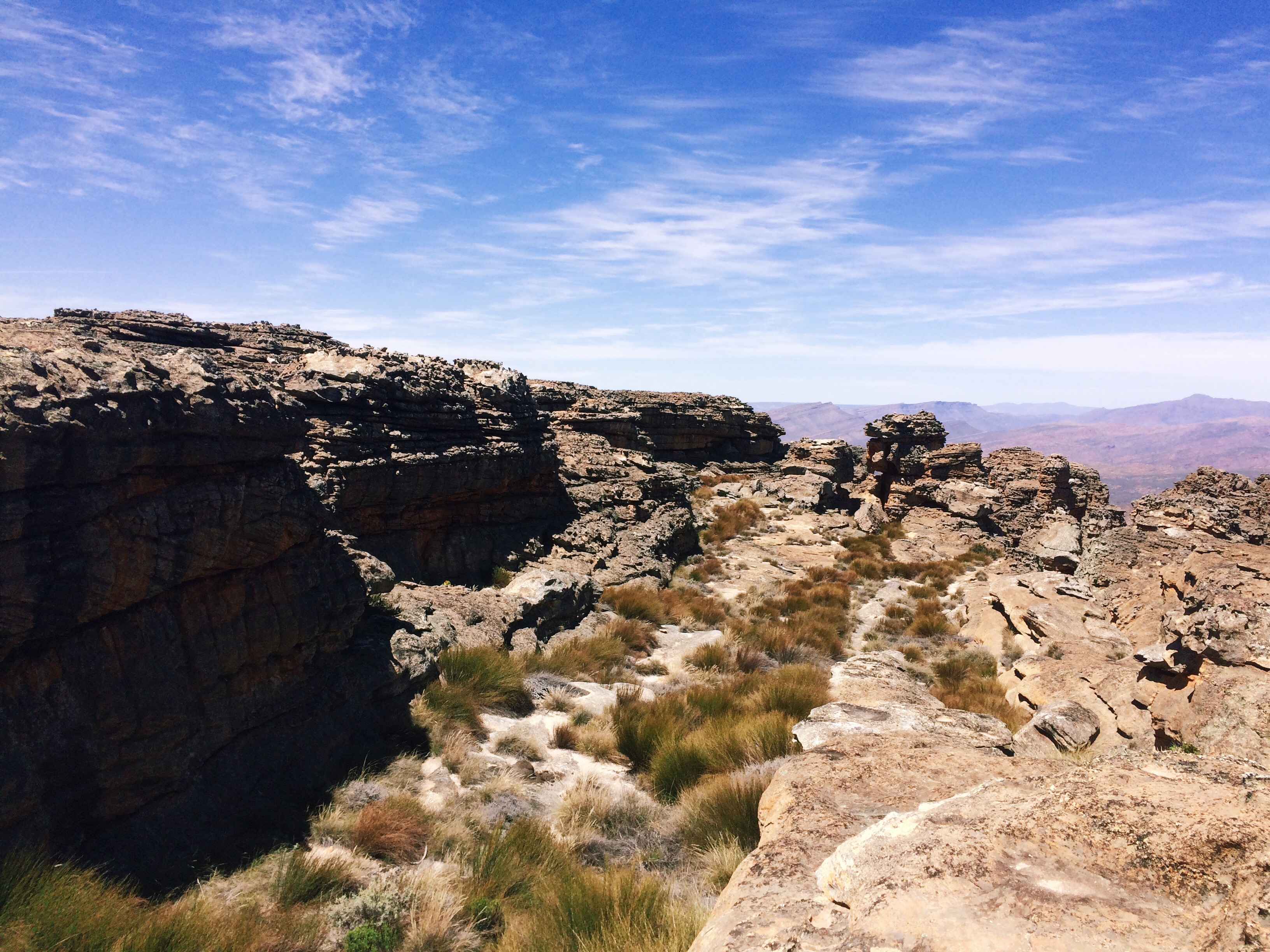 Plants spring up between the rocks - Wolfberg Cracks, Cederberg