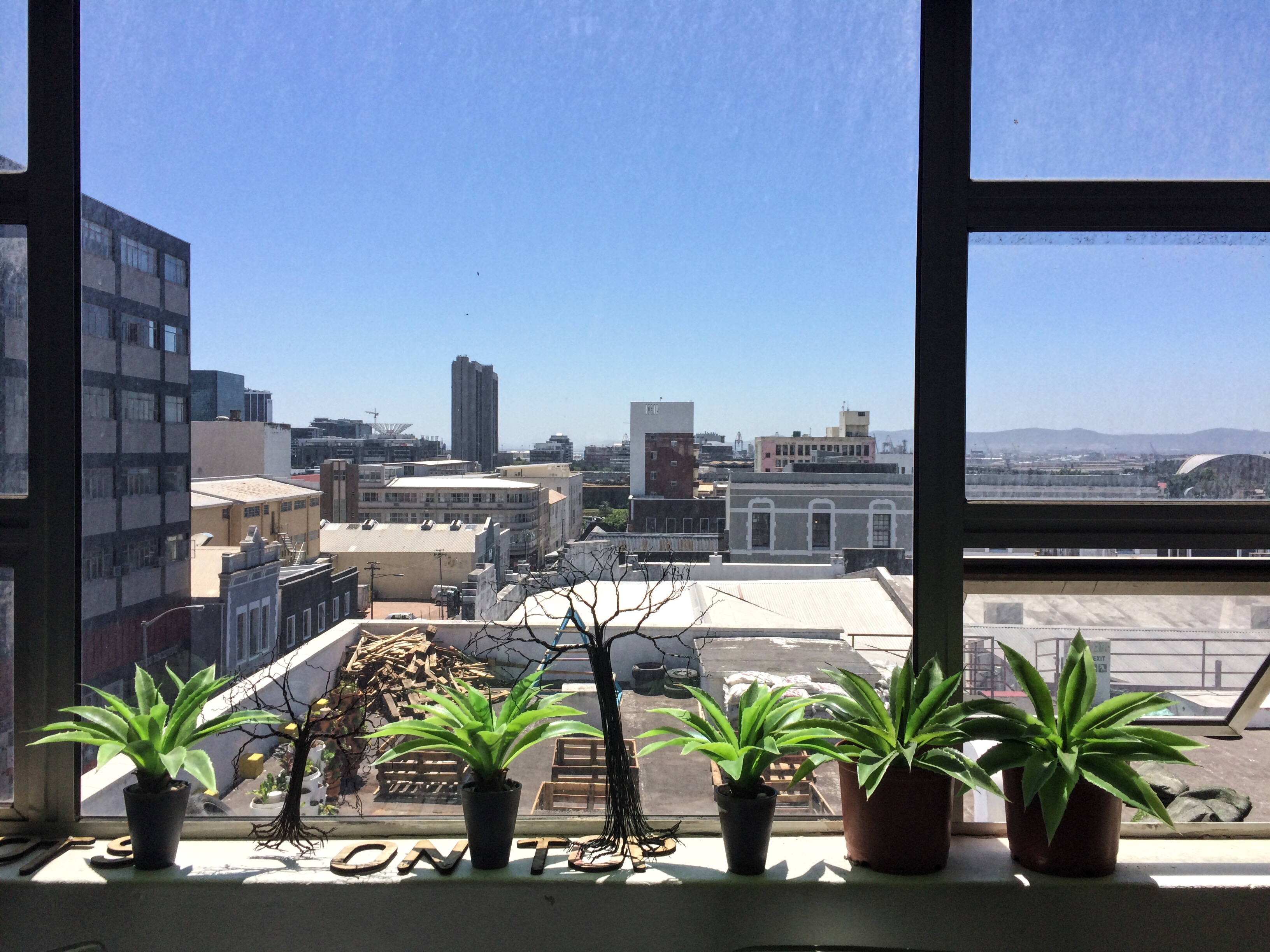 Plants soaking up the sun - 75 Harrington Street, Cape Town