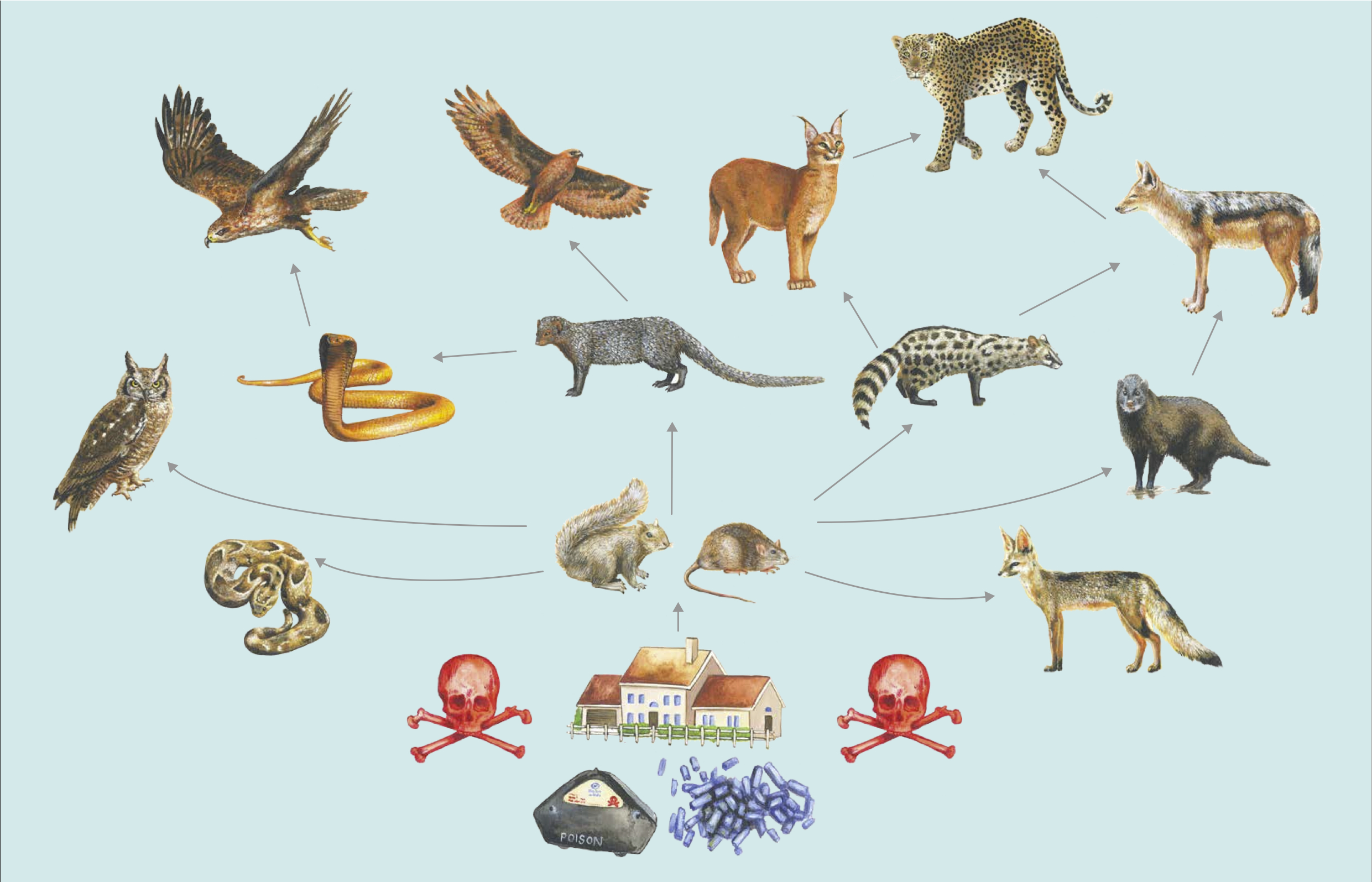 South Africa Food Web