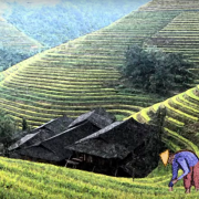 The Story of the Chinese Farmer