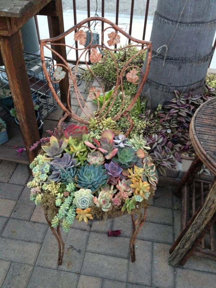 Succulent Garden on Chair