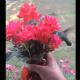 Hummingbirds Flower Feast