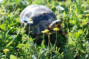 tortoise_by_sb