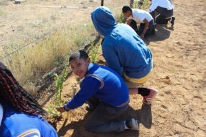 spekboom-planting-at-samara