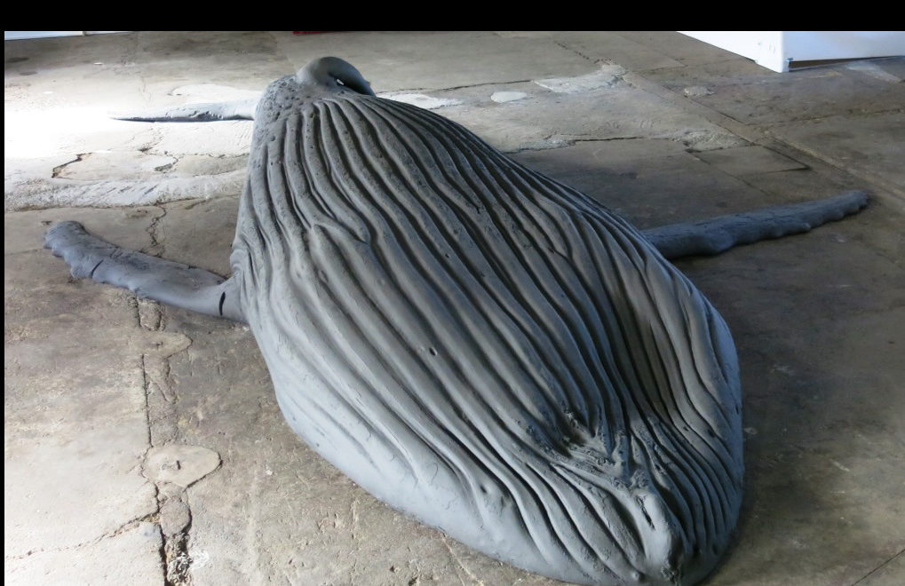 Gil Shachar's whale of a dream …